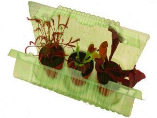 blister plantas carnivoras maceta