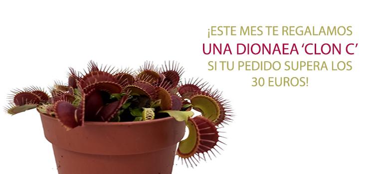 dionaea clon c